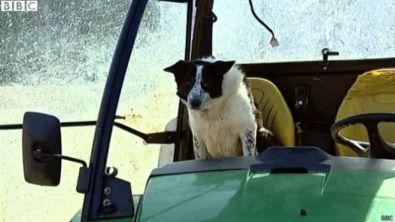 perro-tractor