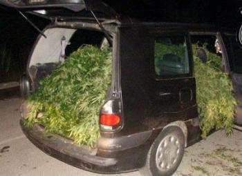 marihuana-coche