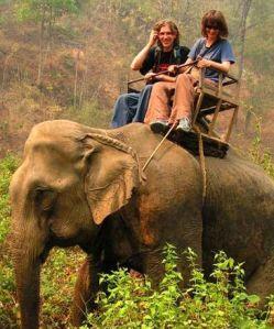 turista-elefantes