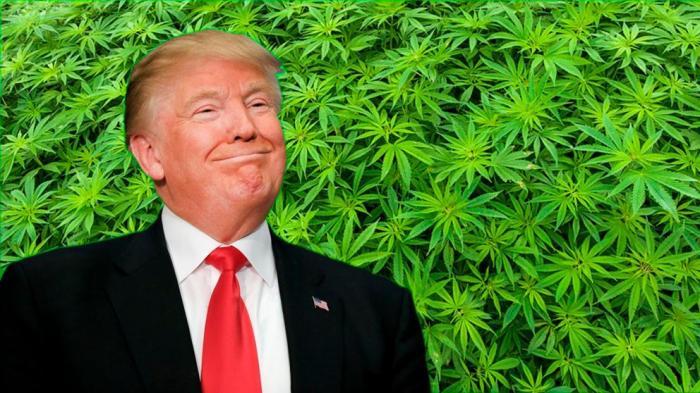 trump_marihuana